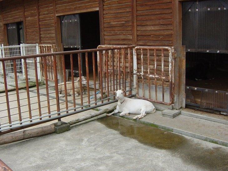 牧場の中に小動物小屋に山羊、羊、豚などがいます。