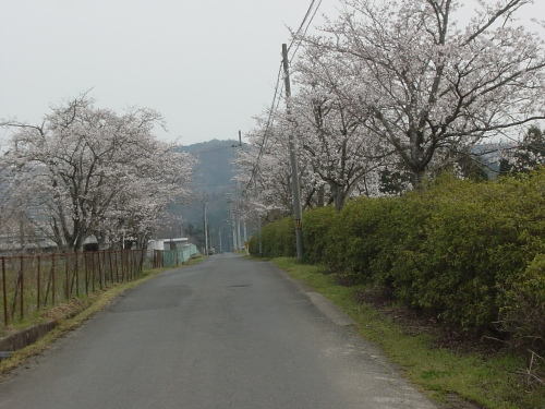 高速道路から桜に囲まれた馬場を望む(1)