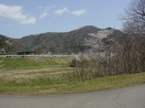 高速道路から桜に囲まれた馬場を望む(2)