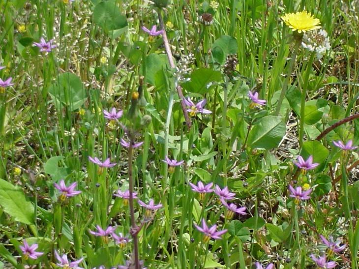 馬場入口の足元に咲く小さな花達も歓迎