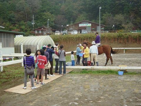 水はけのよい馬場も水溜り、ベニヤ板で通路を確保
