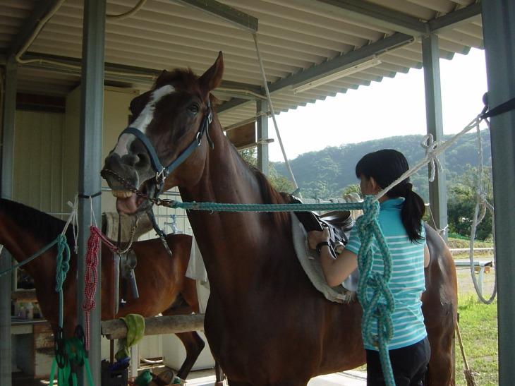 会員による馬装の準備