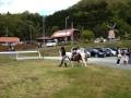 ポニーによる幼児の乗馬