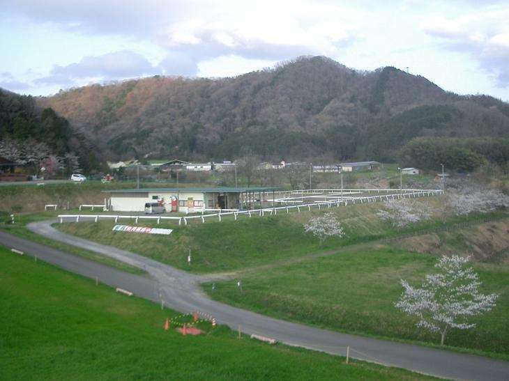 2015.4.2桜満開 005