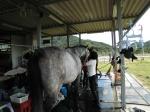 馬の手入れも体験